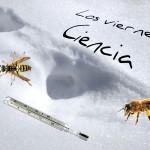 Los viernes, Ciencia: sal, hielo, abejas, avispas…