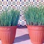 Taller de Primavera: somos jardineros